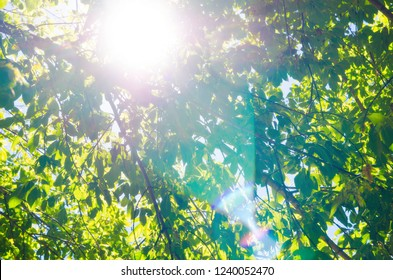 background of green leaves against the sun