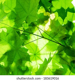 background of green leaves close-up