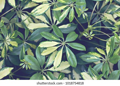 Background of green leaves. Natural background.
