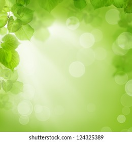 Background of green leaves, summer or spring season