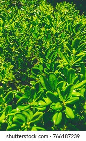 background of green leaves. background and wallpaper