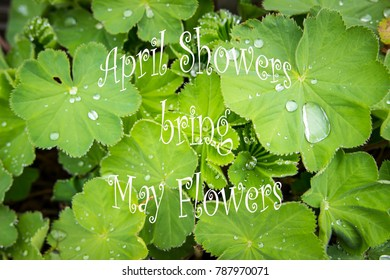 """A background of a green plant with rain droplets and the text """"April Showers bring May Flowers"""""""