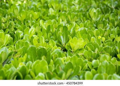 background of green plants