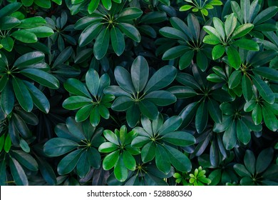background green texture, nature leaf tree, natural tone backdrop