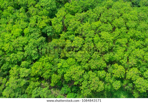 Background of green tree pattern, view from the top