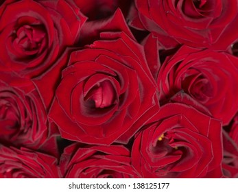 Background of group red rose.