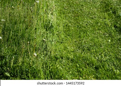Background of growing and cut green grass is close