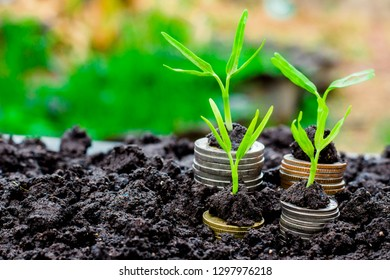 background Growing  Money  Plant On Coins business Finance And Investment Concep