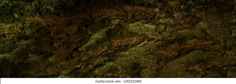 background grunge texture of tree bark closeup