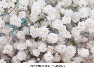 Background of gypsophila (baby's-breath) flowers
