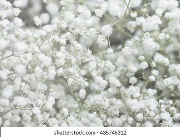 Background of Gypsophila (baby's-breath) flowers , Wedding Concept