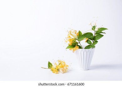 The background of honeysuckle, herbal tea, background material