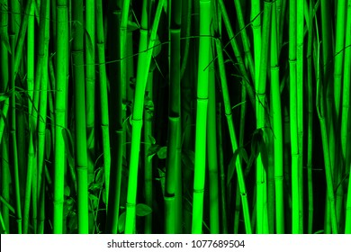 Background image of bamboo grove illuminated by green light in the night closeup