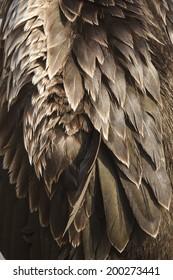 Background image of bird feathers