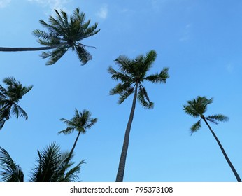 The background image of green tree of coconut trees with the clear blue sky.