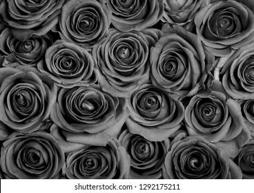 Background image of grey roses