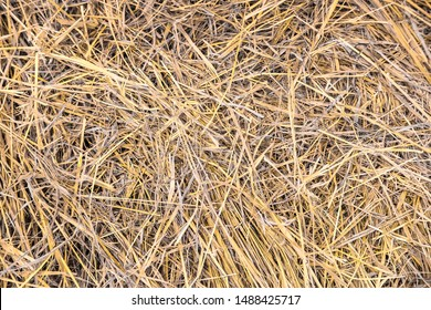 Background with the image of the hay