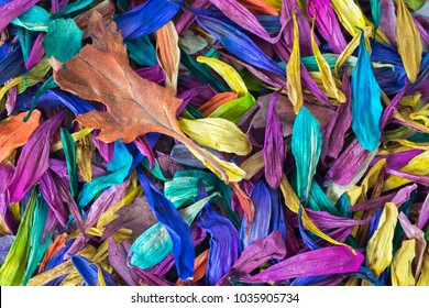 A background image with multi-colored flower petals.