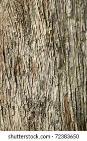 Background image od tree bark