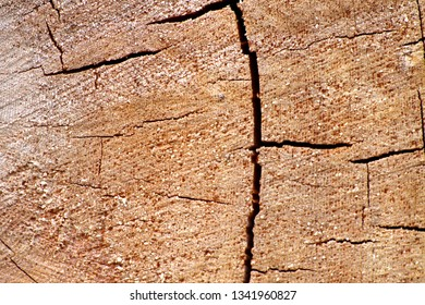The background image on the cut of the tree, the cracks and the texture of real wood, bright color, high contrast, excellent background