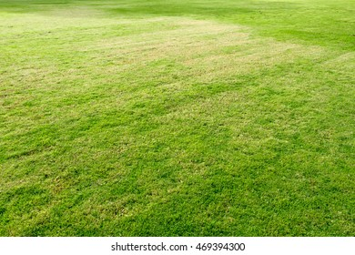 Background image of real natural  green grass yard or football field.