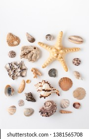 Background image with sea shells of different types. Copy space text