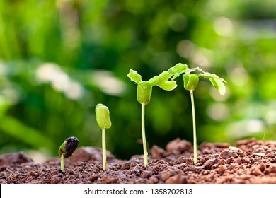 Background image of seedlings growing from fertile soil with morning sunshine