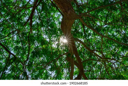 Background image of sunlight coming through set of leaves and branch during summer day. Selective focus