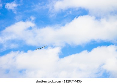 Background image of Two birds flying aginst a blue and white cloudscape with copy space.