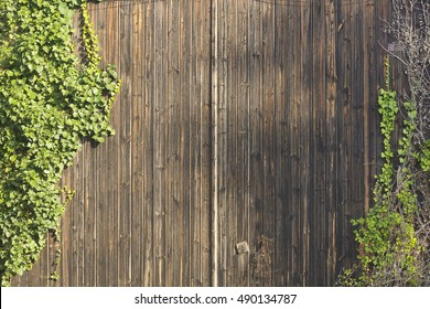 Background image of a wooden wall with climbing plants growing at both sides.