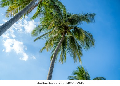 Background images of coconut trees against the sky, summer theme