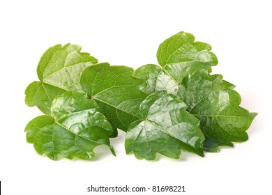Background ivy leaves on white background