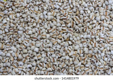 background a lot of job's tears millet