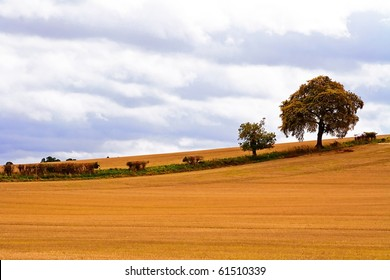 Background landscape of open field with trees.