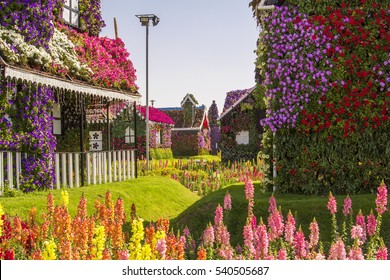 background landscape Street of amazing colorful houses of flowers in the Miracle Garden park, Dubai, United Arab Emirates