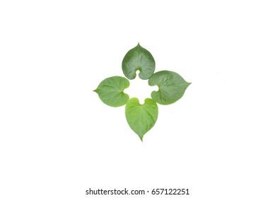 background leaf green