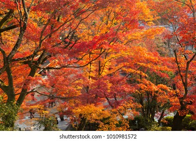 background leaf and tree in Autum season at Japan