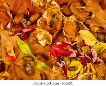 Background of leafs and nuts, warm colour tones