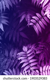 background with leaves colored in pink and blue gradient