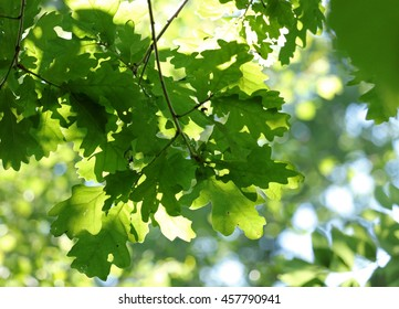 Background leaves sunlight