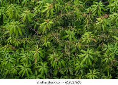 background, leaves, texture, green, nature, design