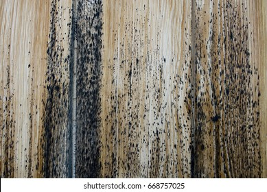 Background: light wood board with some mold spots (caused by weather and humidity) of an ancient high mountain hut in switzerland, alps, switzerland