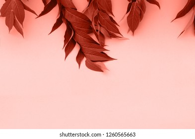 Background with lively sprigs of coral color.