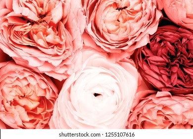 Background Made of beautiful roses. Ispired by color of the year 2019 - Living Coral.