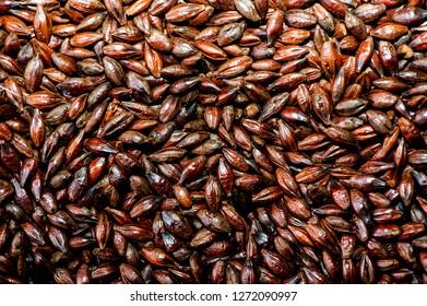 background made of dark barley malt grains
