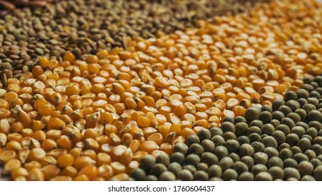 Background made with dried grains and seeds with opposite diagonal perspective, including chickpeas, beans, lentils, pop corn and peas, representing food sovereignty and the importance of food in time