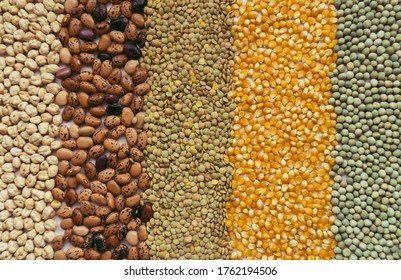 Background made with dry grains and seeds, including chickpeas, beans, lentils, pop corn and peas, representing food sovereignty and the importance of food in times of coronavirus or covid 19