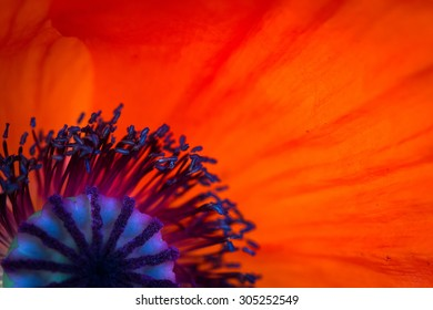 Close up poppy images stock photos vectors shutterstock background made of red poppy flower close up mightylinksfo Choice Image