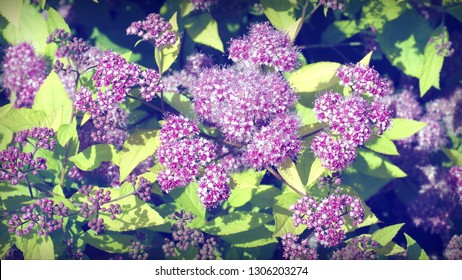 background with magenta flowers