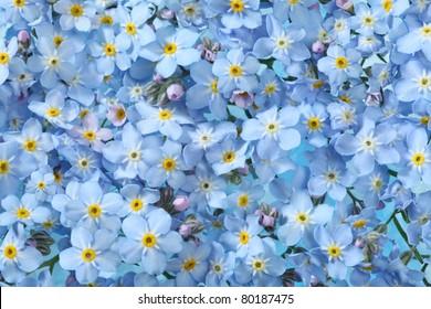 Hintergrund vieler blauer Blumen